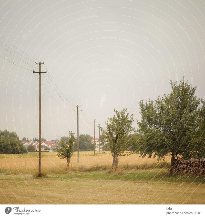 außerorts Umwelt Natur Landschaft Himmel Sommer Pflanze Baum Gras Sträucher Grünpflanze Nutzpflanze Wildpflanze Wiese Feld Kleinstadt Strommast natürlich