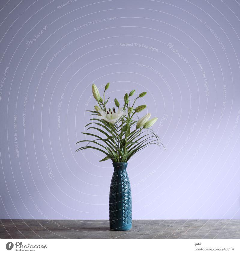 lilien weiß Blume grün blau Pflanze Blatt Blüte Holz ästhetisch violett Blumenstrauß Vase Lilien Blumenvase