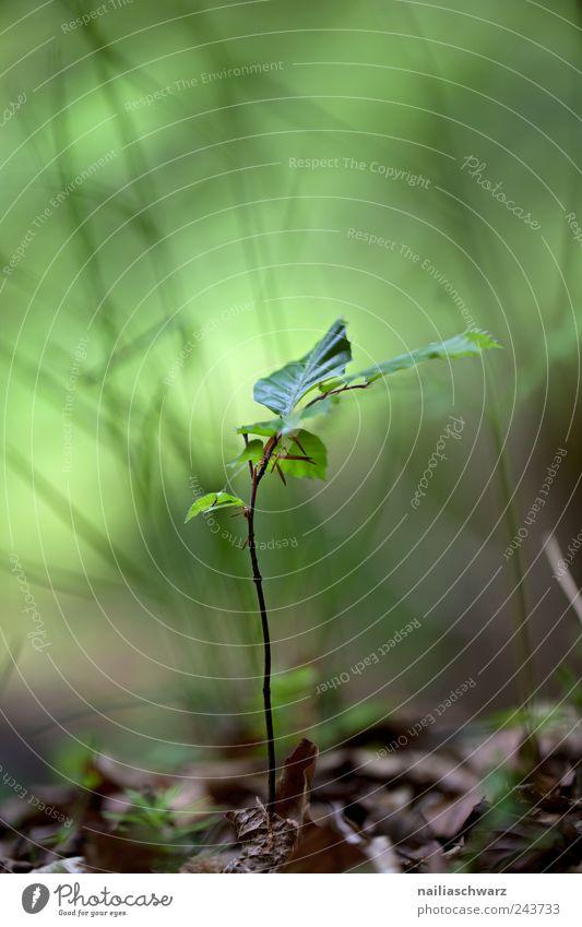 Das Leben Natur grün Baum Pflanze Wald Umwelt Holz klein Frühling Wetter Kraft Erde Beginn Klima Wachstum Hoffnung