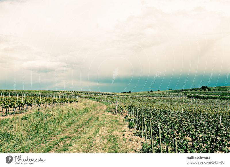 Weinstrasse blau grün Pflanze Sommer Ferne gelb Umwelt Landschaft Stimmung Horizont Erde Wetter Feld Frucht Klima Wachstum