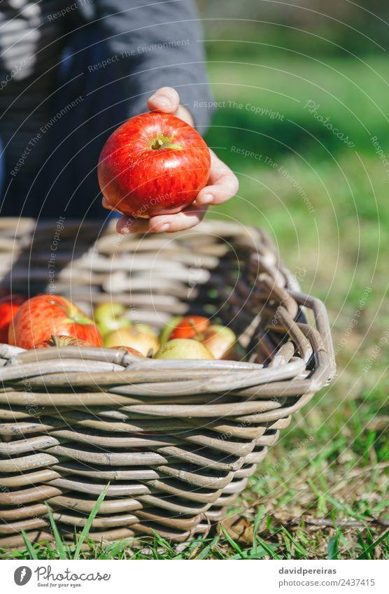 Kind Mensch Natur Mann grün Hand rot Freude Erwachsene Lifestyle Herbst natürlich Junge klein Garten Freizeit & Hobby