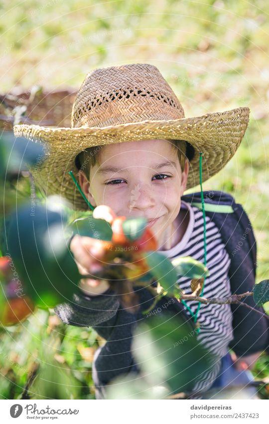 Glückliches Kind mit Hut, das Äpfel vom Baum pflückt. Frucht Apfel Lifestyle Freude Freizeit & Hobby Garten Mensch Junge Mann Erwachsene Hand Natur Herbst