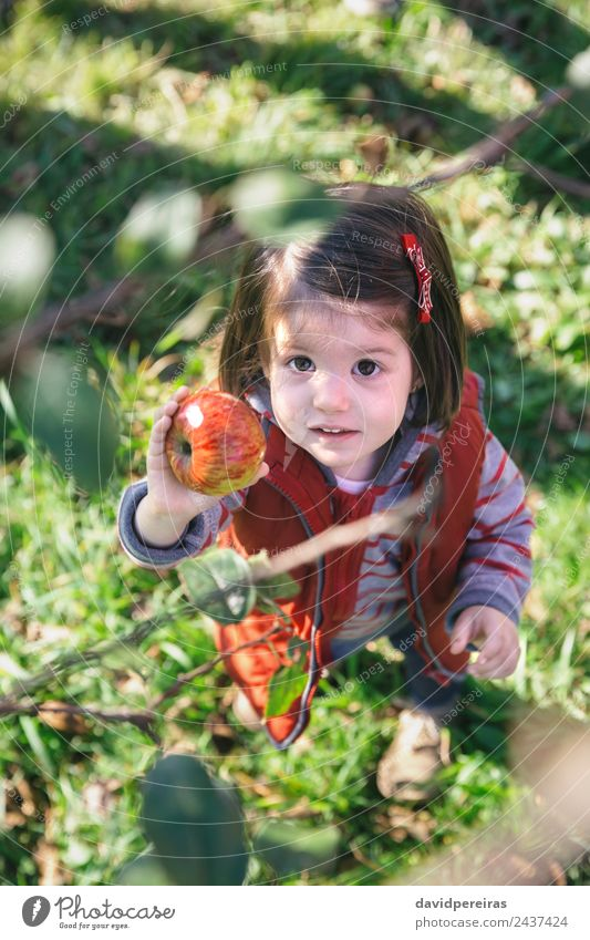 Kleines Mädchen hält Bio-Apfel in der Hand. Frucht Lifestyle Freude Glück Freizeit & Hobby Garten Kind Mensch Frau Erwachsene Familie & Verwandtschaft Kindheit