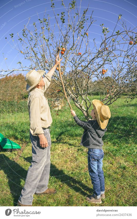 Senior Mann und Kind beim Äpfelpflücken mit Holzstab Frucht Apfel Lifestyle Freude Glück Freizeit & Hobby Garten Mensch Junge Erwachsene Großvater