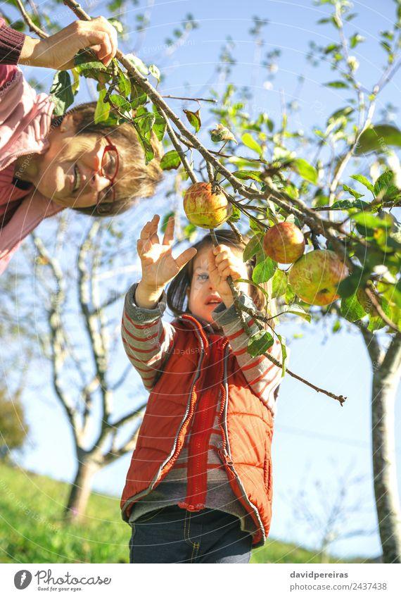Kleines Mädchen, das mit einer älteren Frau Äpfel vom Baum pflückt. Frucht Apfel Lifestyle Freude Glück Freizeit & Hobby Garten Kind Mensch Baby Erwachsene