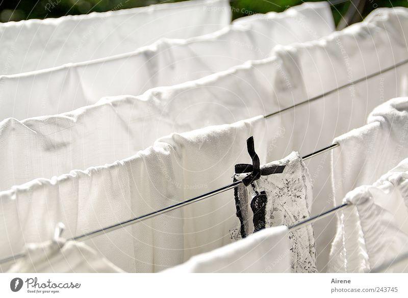 Schwarzes Scha(r)f Häusliches Leben Haushaltsführung Bekleidung Unterwäsche Stoff Wäsche Wäscheleine Wäsche waschen Wäscheständer Schleife Metall Linie hängen