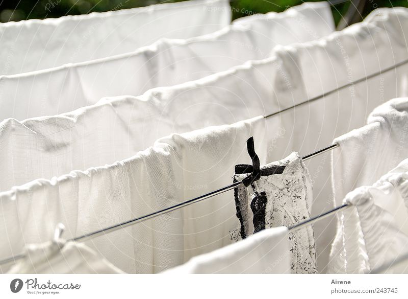 Schwarzes Scha(r)f weiß schwarz Linie Metall nass Bekleidung Sauberkeit rein Häusliches Leben Stoff trocken hängen Unterwäsche Wäsche waschen Schleife