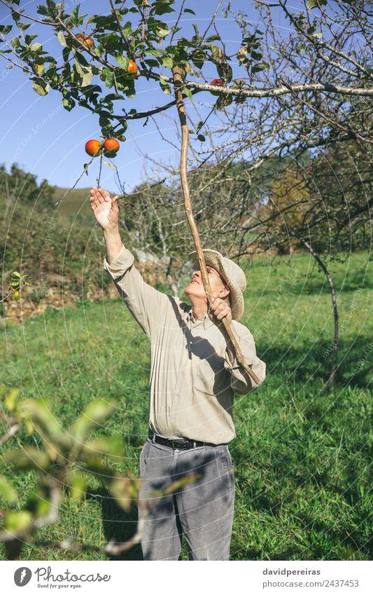 Mensch Natur Mann grün Hand Baum rot Freude Erwachsene Lifestyle Herbst natürlich Glück Garten Zusammensein Freizeit & Hobby