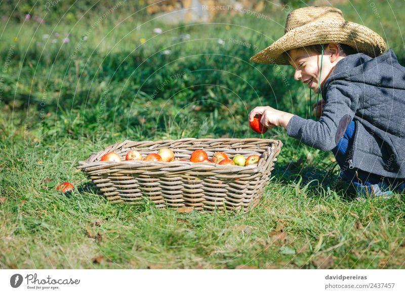 Glückliches Kind, das den Apfel in einen Weidenkorb mit Ernte legt. Frucht Lifestyle Freude Freizeit & Hobby Garten Mensch Junge Mann Erwachsene Hand Natur