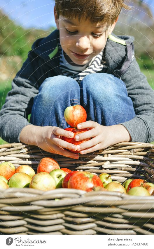 Glückliches Kind spielt mit Äpfeln über einem Weidenkorb. Frucht Apfel Lifestyle Freude Freizeit & Hobby Spielen Garten Mensch Junge Mann Erwachsene Kindheit
