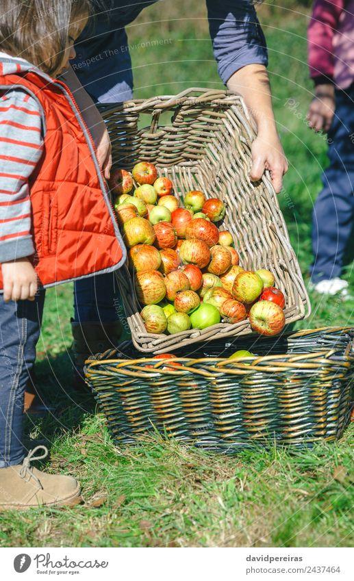 Frau, die Äpfel in den Korb legt und ein kleines Mädchen, das aussieht. Frucht Apfel Lifestyle Freude Glück schön Freizeit & Hobby Garten Kind Mensch Erwachsene