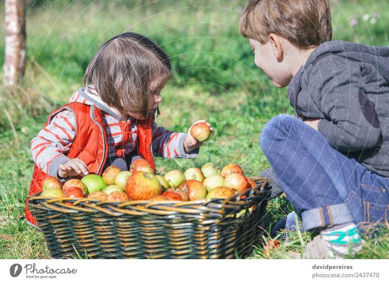 Kinder mit Bio-Apfel aus dem Korb mit Früchten Frucht Lifestyle Freude Glück Freizeit & Hobby Garten Mensch Junge Frau Erwachsene Mann Familie & Verwandtschaft