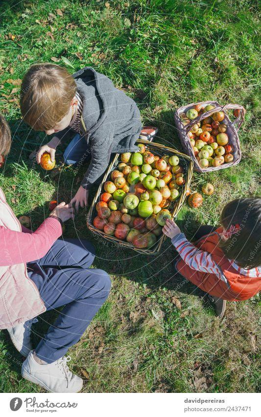 Kinder und ältere Frauen, die Äpfel in Körbe legen. Frucht Apfel Lifestyle Freude Glück Freizeit & Hobby Garten Mensch Junge Erwachsene Mann Großmutter