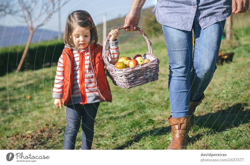 Kleines Mädchen trägt Weidenkorb mit frischen Bio-Äpfeln Frucht Apfel Lifestyle Freude Glück schön Freizeit & Hobby Garten Mensch Frau Erwachsene Mutter Hand