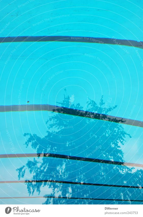 Freibad blau Wasser Baum ruhig Erholung träumen Linie Schwimmen & Baden glänzend Beton Streifen Schwimmbad tauchen Becken Pflanze Strukturen & Formen