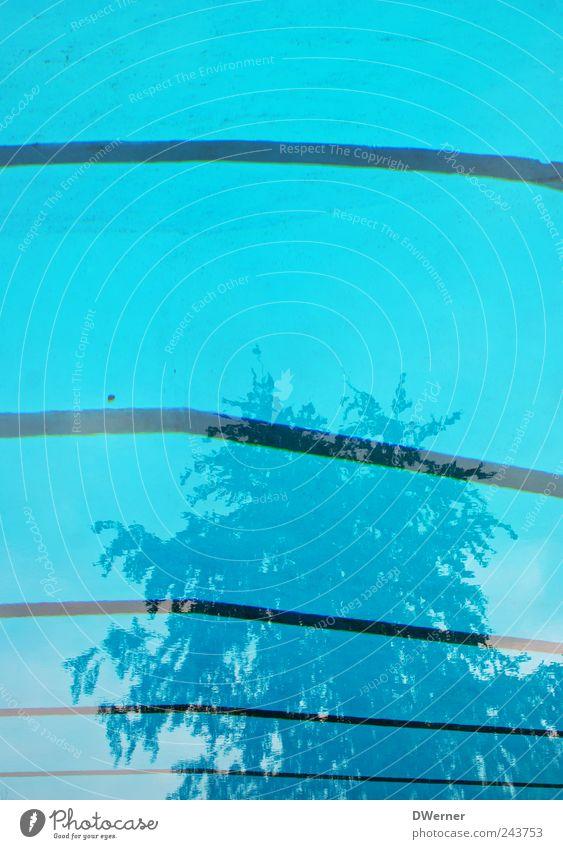 Freibad Erholung ruhig Schwimmen & Baden tauchen Sportstätten Schwimmbad Wasser Baum Beton träumen glänzend blau Linie Streifen Becken Reflexion & Spiegelung
