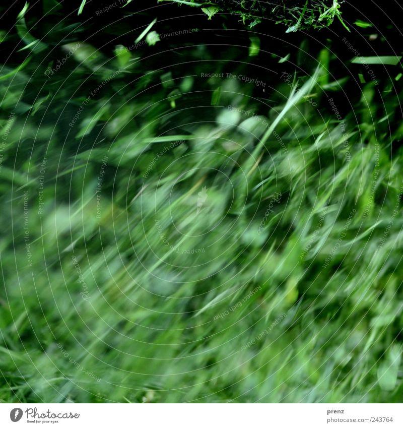 gras Pflanze Gras Park Wiese frisch saftig grün Blatt Halm fliegend Linie Teile u. Stücke Farbfoto Außenaufnahme Menschenleer Tag Bewegungsunschärfe