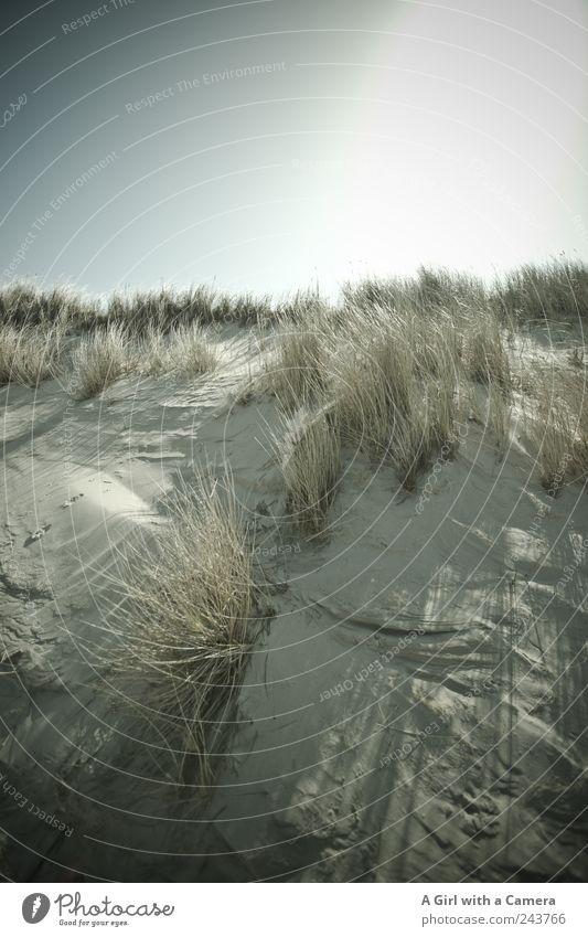 Spiekeroog l das Letzte Strand Meer Umwelt Natur Landschaft Pflanze Urelemente Sand Himmel Wolkenloser Himmel Sonne Sommer Klima Wetter Schönes Wetter Gras