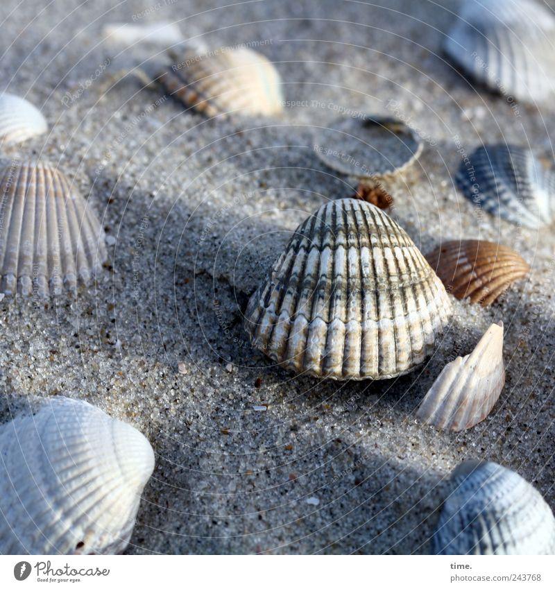 Spiekeroog | Strandgelage Muschel Sand Ferien & Urlaub & Reisen Reisefotografie Meer Insel Sammlung Suche finden Umwelt Urelemente Erde Wasser Küste Nordsee