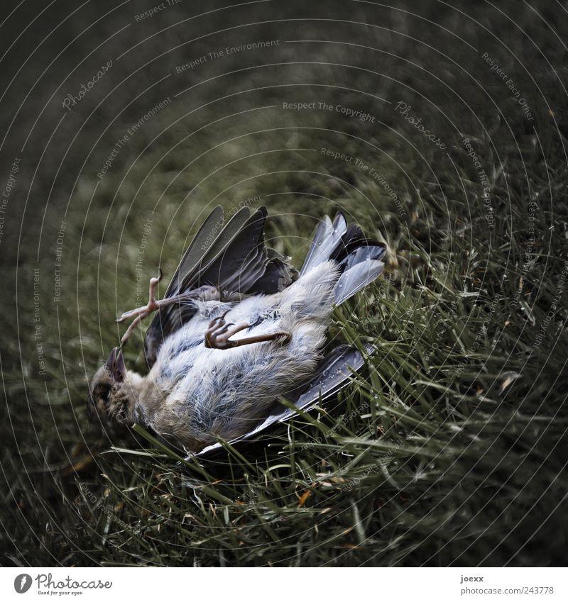 Aus alt grün ruhig Tier Tod Gras grau braun Vogel gruselig