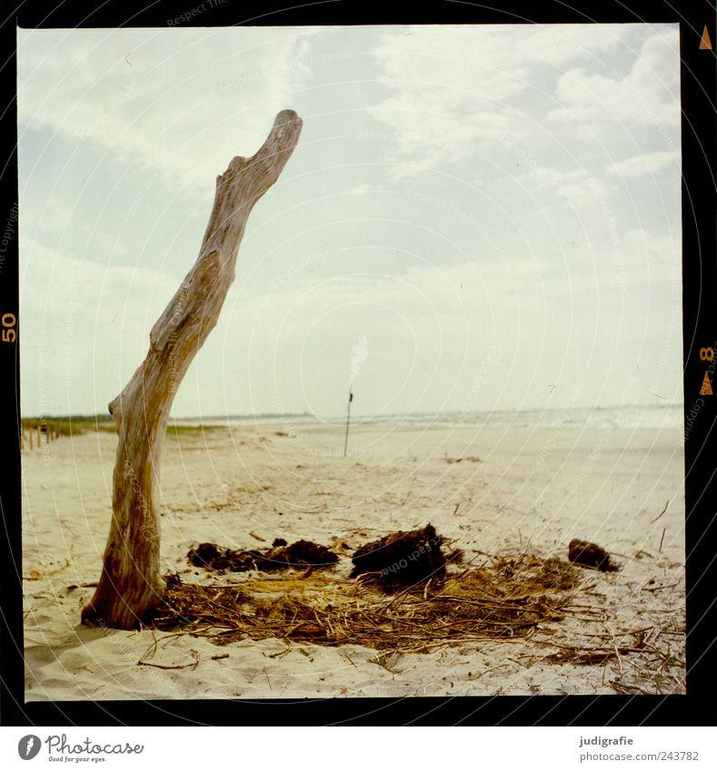 Weststrand Umwelt Natur Landschaft Sand Himmel Küste Strand Ostsee Meer Darß Holz natürlich wild Stimmung Einsamkeit Idylle Farbfoto Außenaufnahme Menschenleer