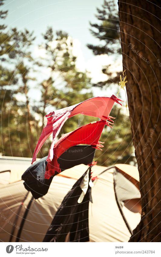Flugsaurier Freizeit & Hobby Camping Umwelt Natur Schönes Wetter Wind Baum Bekleidung T-Shirt Hemd hängen authentisch einfach natürlich Campingplatz Zelt Wäsche