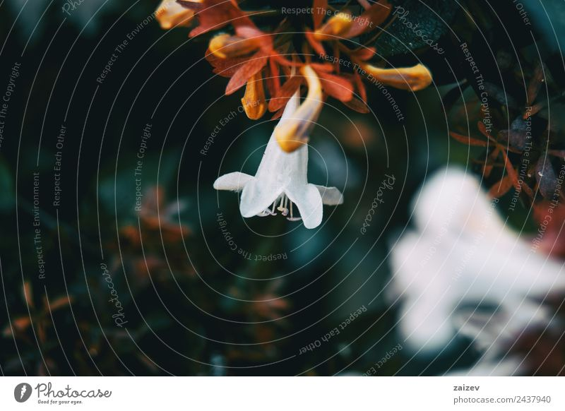 Nahaufnahme bunte kleine Blume weißer Farbhintergrund im Garten Design schön Sommer Berge u. Gebirge Umwelt Natur Pflanze Frühling Blatt Blüte Grünpflanze