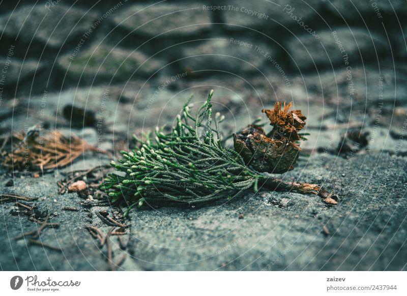 Natur alt Pflanze Farbe schön grün Baum Blatt Wald Berge u. Gebirge dunkel Umwelt Herbst natürlich Wiese Garten