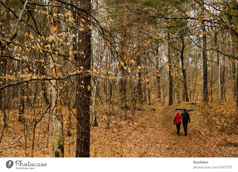 einsam zweisam Mensch Natur Baum Pflanze Erholung Wald Liebe sprechen Herbst Bewegung Glück Denken Paar Freundschaft braun Zusammensein