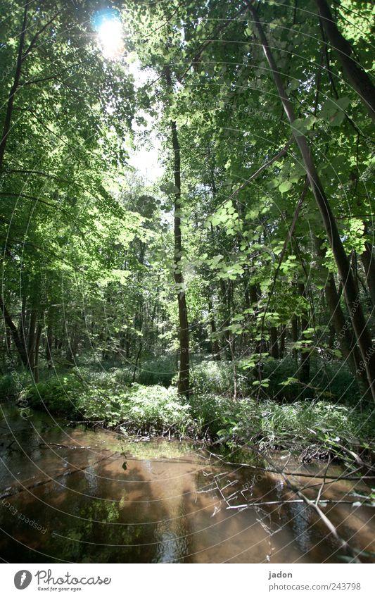 Abenteuer im Zauberwald Natur Landschaft Pflanze Wasser Sonne Sonnenlicht Baum Farn Urwald Flussufer Moor Sumpf Teich Bach alt Mut Surrealismus Umwelt