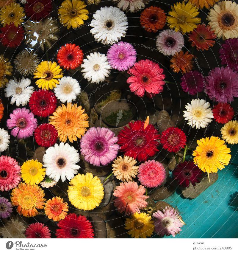 Floating Flowers Pt.1 Natur Wasser Pflanze Blume ruhig Erholung Blüte Zufriedenheit Schwimmen & Baden natürlich nass Blühend Flüssigkeit Lebensfreude Duft Wohlgefühl
