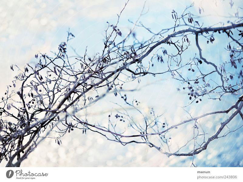 Eisblau Natur Frost Schnee Baum Zweige u. Äste glänzend hell kalt weiß Farbfoto Außenaufnahme Menschenleer Textfreiraum oben Textfreiraum unten Tag Sonnenlicht