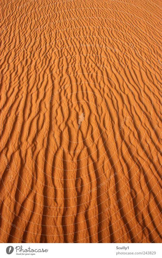 Wüste in Saudi Arabien Natur Landschaft Urelemente Sand Erde Sommer Klima Klimawandel Schönes Wetter Wind Dürre Küste Strand beobachten berühren Erholung