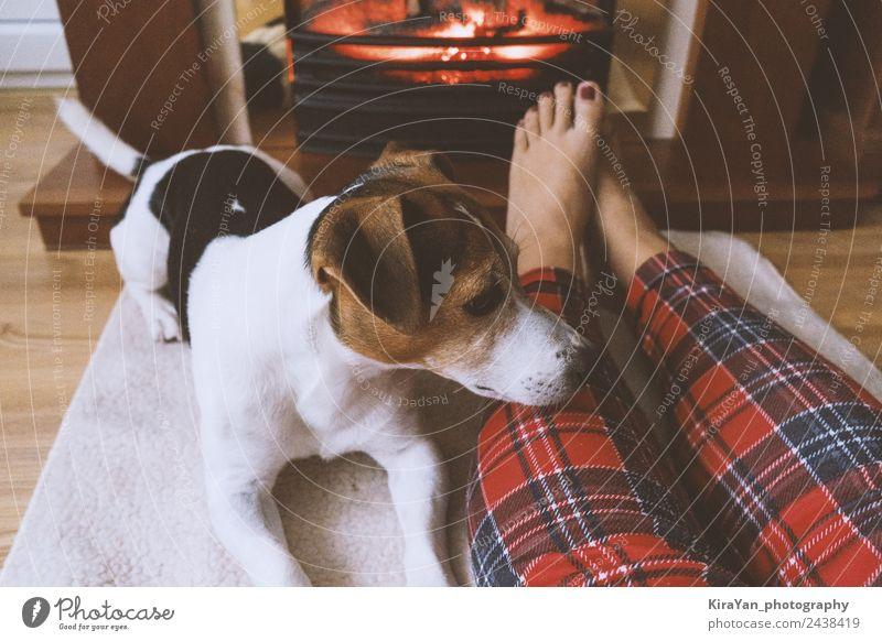 Weibliche Füße und süßer Hund im Kamin vor dem Kamin Glück Pediküre Erholung Winter Frau Erwachsene Freundschaft Paar Fuß Wärme Haustier sitzen klein lustig