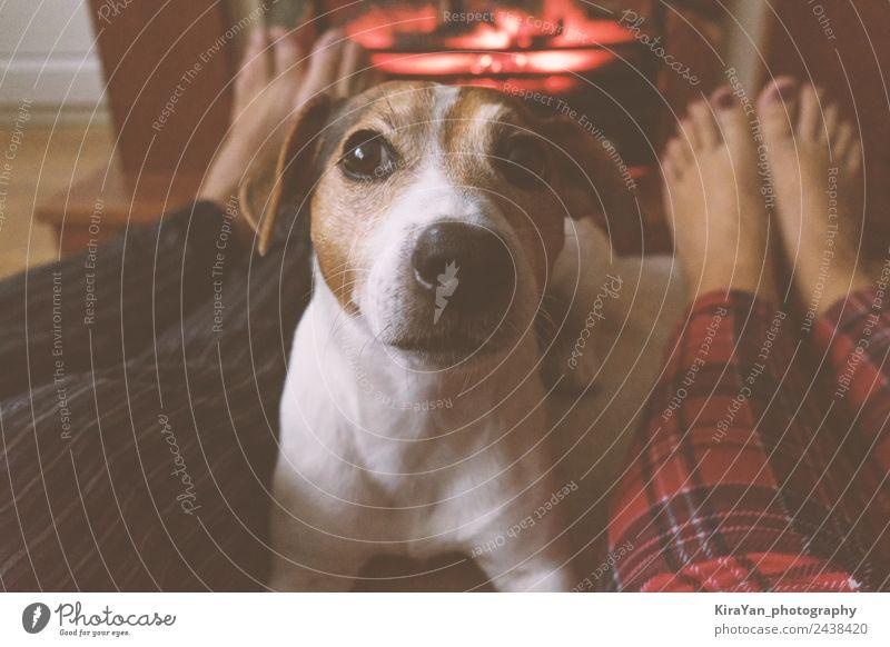 Die Beine von Paar und Jack Russell Dog sitzen am Kamin. Lifestyle Glück Erholung Winter Familie & Verwandtschaft Freundschaft Fuß Wärme Haustier Hund