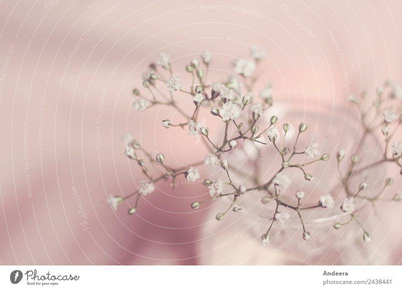 Schleierkraut mit Rosa Stil Häusliches Leben Wohnung einrichten Dekoration & Verzierung Pflanze Frühling Blume Blüte Schalen & Schüsseln Blumenstrauß Sammlung