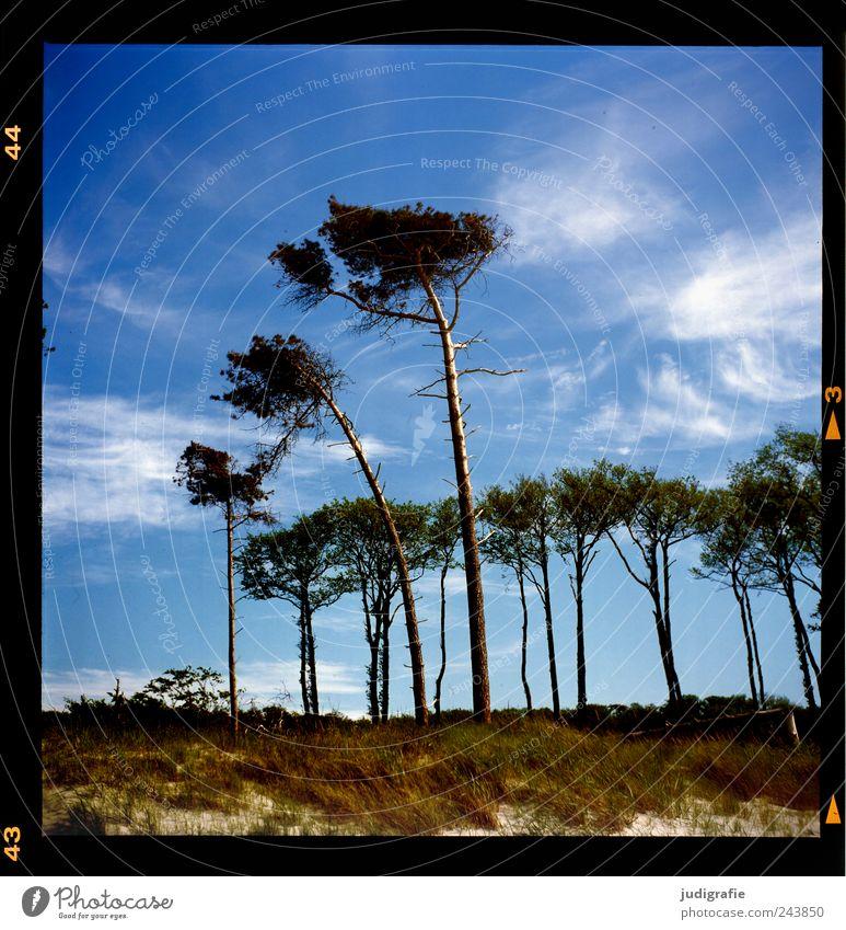Weststrand Natur Himmel Baum Pflanze Sommer Strand Gras Landschaft Küste Umwelt Wachstum Klima wild natürlich Idylle Düne