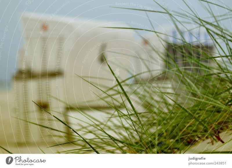 Ostsee Umwelt Natur Landschaft Sommer Gras Küste Strand Stranddüne Dünengras Prerow Darß Stimmung Erholung Idylle ruhig Ferien & Urlaub & Reisen Strandkorb