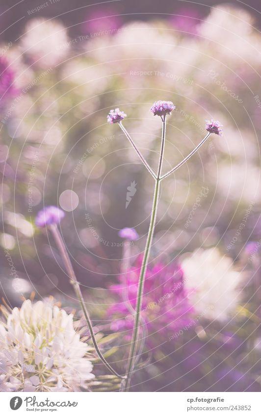 Dreibein Pflanze Sommer Blume Garten Frühling Park Schönes Wetter