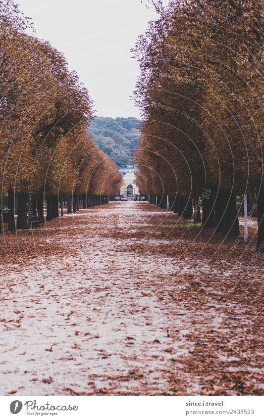 Schlosspark Schönbrunn im Herbst Ferien & Urlaub & Reisen Tourismus Ausflug Sightseeing Städtereise Museum Architektur Natur Landschaft Garten Park Wien