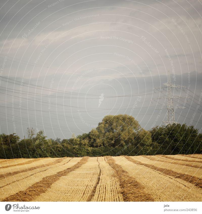 feld Umwelt Natur Landschaft Himmel Pflanze Baum Gras Sträucher Grünpflanze Nutzpflanze Wildpflanze Feld Strommast natürlich blau gold grün Farbfoto