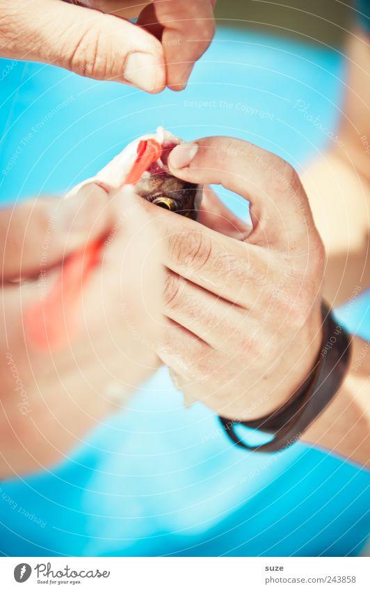 Der Haken an der Sache Freizeit & Hobby Angeln Hand Finger Fisch festhalten blau Angler Angelschnur Fischereiwirtschaft Fischmaul befreien Farbfoto mehrfarbig