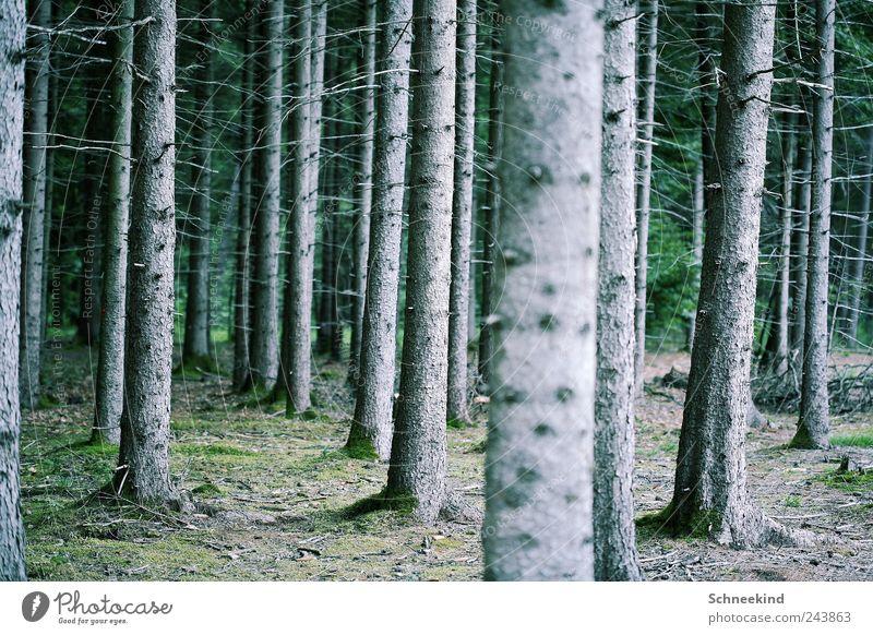 Meister der Geduld Umwelt Natur Landschaft Baum Gras Sträucher Moos Wald genießen Ast Baumstamm Außenaufnahme Erholung Einsamkeit mehrere Luft atmen