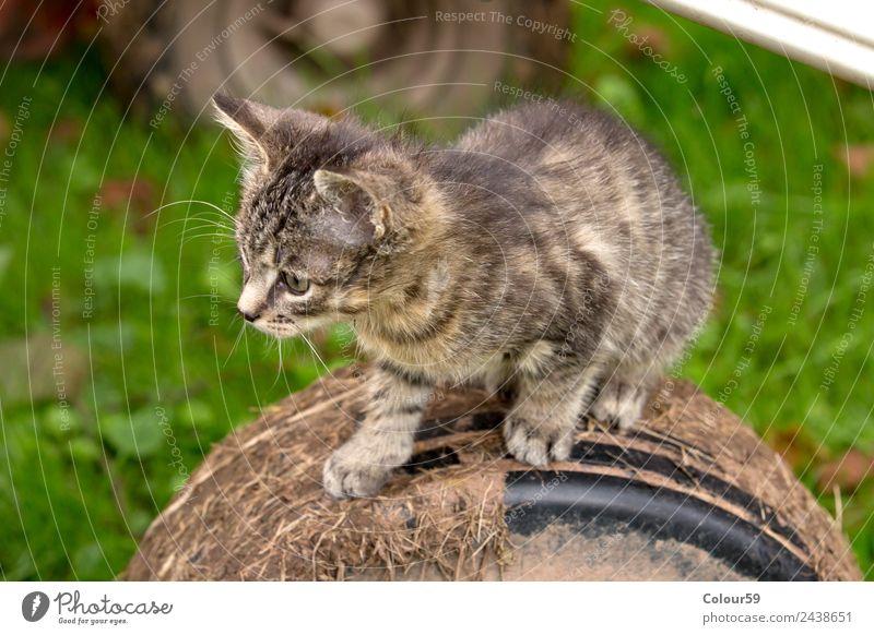 Niedliches Katzenbaby Natur Sommer Tier Tierjunges Gefühle grau gehen Zufriedenheit authentisch Lebensfreude warten beobachten Neugier Haustier Fell
