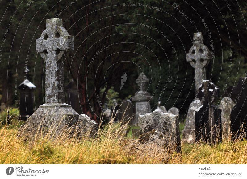 Alte keltische Steinkreuze bei Glendalough in Irland ruhig Religion & Glaube Umwelt Traurigkeit Gras Tod Park Vergänglichkeit Trauer Frieden Christliches Kreuz