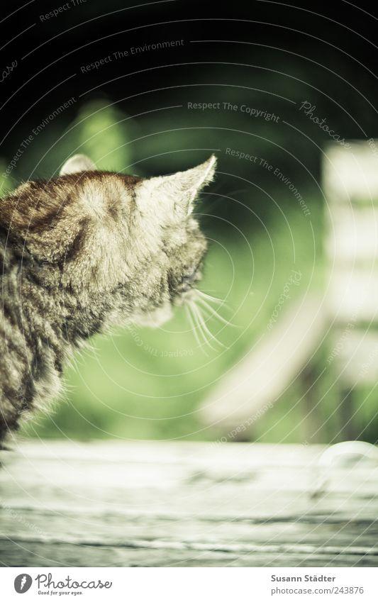 einsam. Garten Tier Haustier Katze 1 Holz alt Traurigkeit Sorge Trauer Tod Heimweh Enttäuschung Einsamkeit Angst Erwartung Trennung mehrfarbig Außenaufnahme