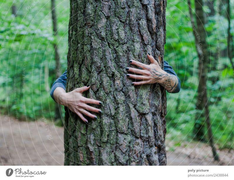 [AM104] - Hände einer jungen Dame umschlingen einen Baum Mensch Natur Ferien & Urlaub & Reisen Jugendliche Junge Frau Sommer Pflanze Hand Erholung ruhig
