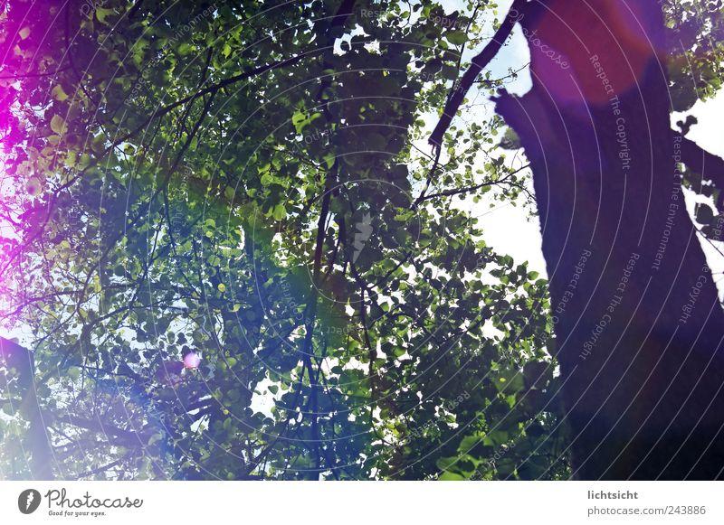 das leuchten im Walde Umwelt Natur Pflanze Sommer Schönes Wetter Baum mehrfarbig grün rosa Lebensfreude Freiheit Freizeit & Hobby Blendenfleck Baumstamm Blatt