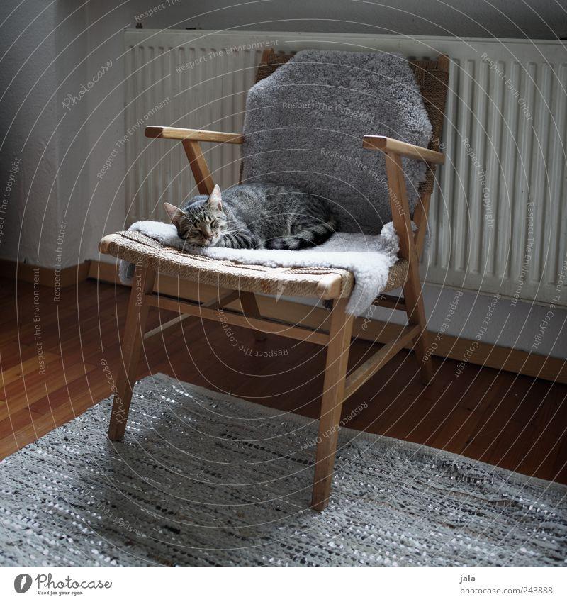 katzenleben Häusliches Leben Wohnung Möbel Sessel Teppich Heizung Parkett Tier Haustier Katze 1 genießen schlafen braun grau weiß Vertrauen Geborgenheit
