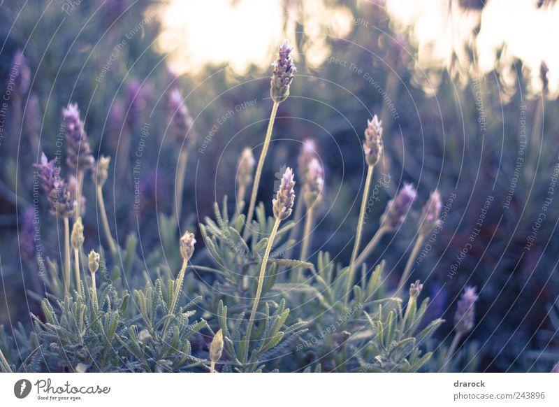Natur Blume grün Pflanze Blatt Blüte Gras Park violett Wildpflanze